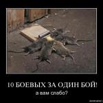 10_boevyh