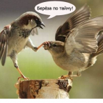 bereza_time